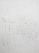 parktrees_59x42_pencilonpaper